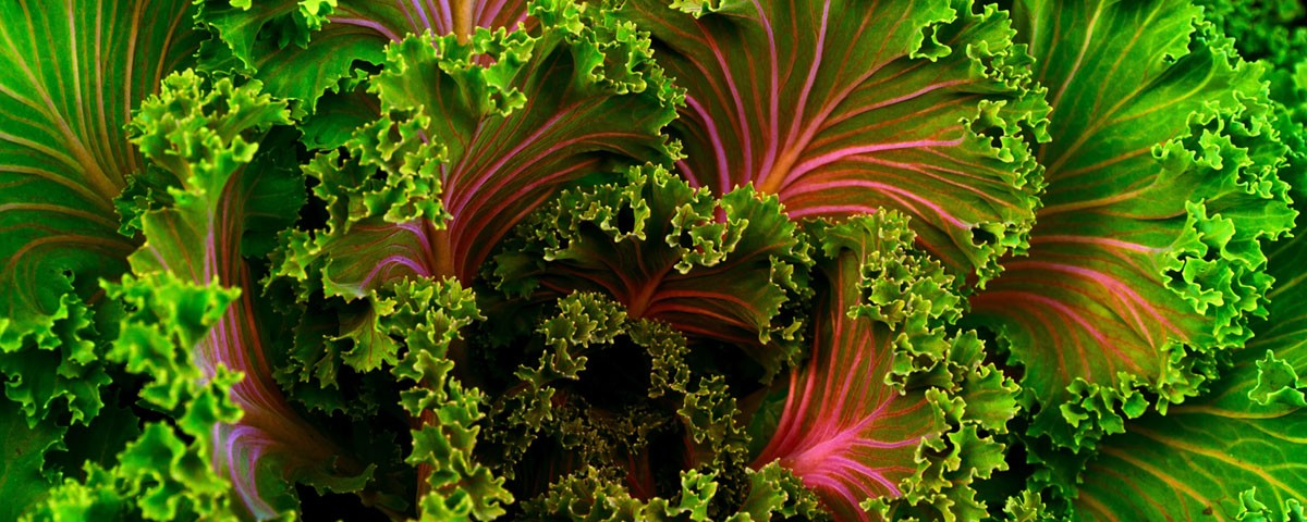 veg-healthy